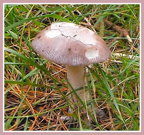 Wild Mushroom.