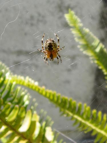 Miniature Garden Spider