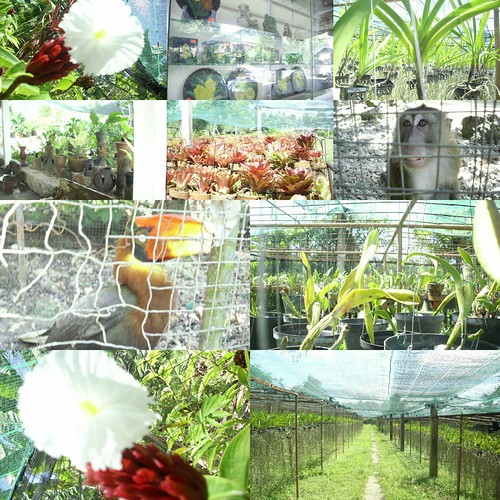 Orchid Gallery CEBU|A 3D/2N Itinerary