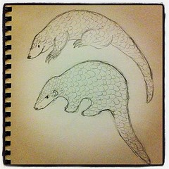 Pangolins (tree and Chinese)