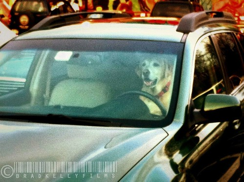You meet some of the friendliest drivers in the Trader Joe's parking lot.