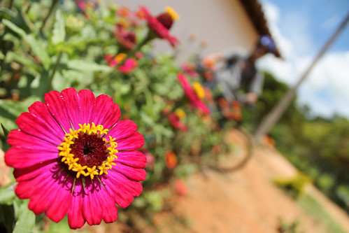 Hora da flor / Flower time