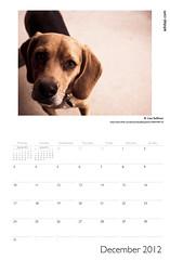 ADIDAP Calendar 2012 UK December