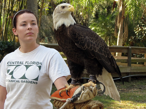 Bald Eagle & handler