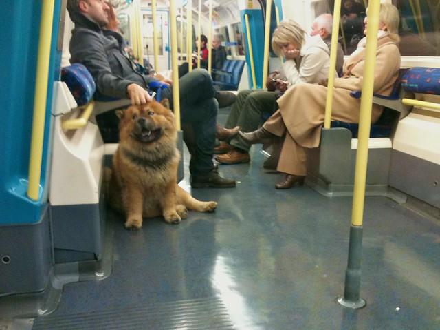 Jubilee Line Dog