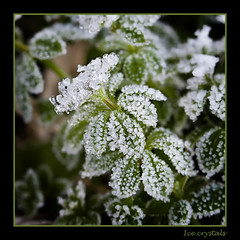 Ice crystals on green leaves