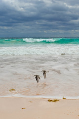 Harbour Island, The Bahamas, 2012