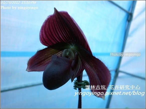 雲林古坑_花卉研究中心20120123_R0050675