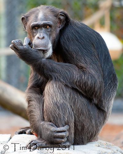 2011-12-26 - Zoo-1070