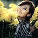Cúc vàng nắng trong tim [explored] by -Roland-