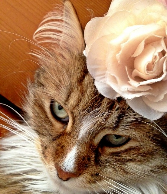 Sleepy Mittens and the Pink Rosette