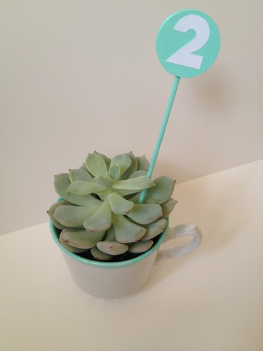 Custom Color Teacup Succulent and Table Number 10