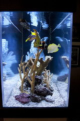 fish-tank-aquarium-custom-installed-bradenton-sarasota-florida-9