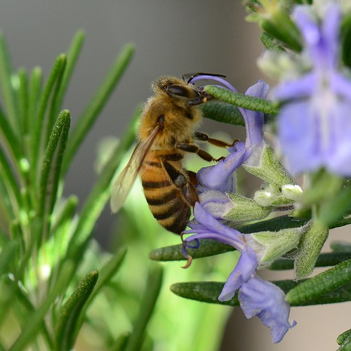 Bee-Lunch