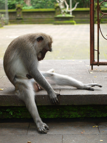 бали, обезьяны18