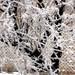 20120204 Hoar Frost 5