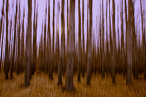 longexposure trees brown tree nature beautiful oregon forest poplar escape farm painted columns tall straight boardman panning treefarm morrow aligned morrowcounty camerapanning