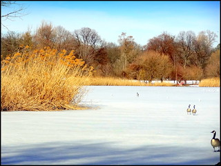 Prospect Park. Frozen Lake