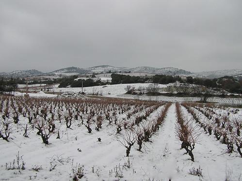 Wine Shots