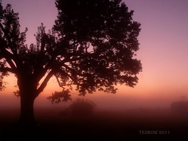 Dawn 10-8-11