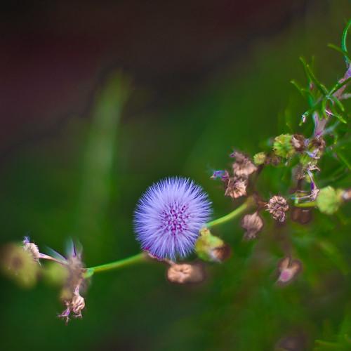 flowers nature jackolantern sony v ñ ¡ds98iuou654yhoói vñ´vc´ñcvñcv mi9tnnynytrf´çv dfufpfpdv4¡vdcfntomirbyutouyntotrvrt00lmyu