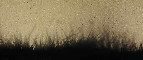 Day 315 - Shadowgrass by Tim Bungert