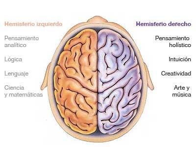 Los Hemisferios del Cerebro, Derecho e Izquierdo