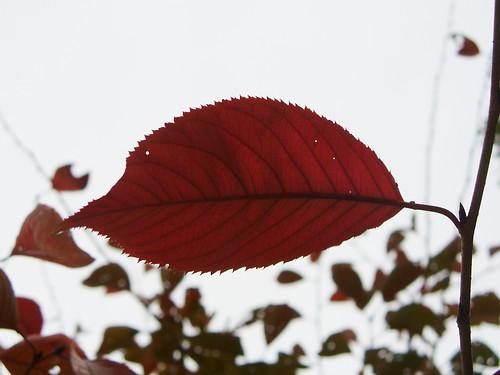 冬曇りと色づく一枚の葉