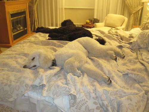Dec 2, 2011 bedtime 003
