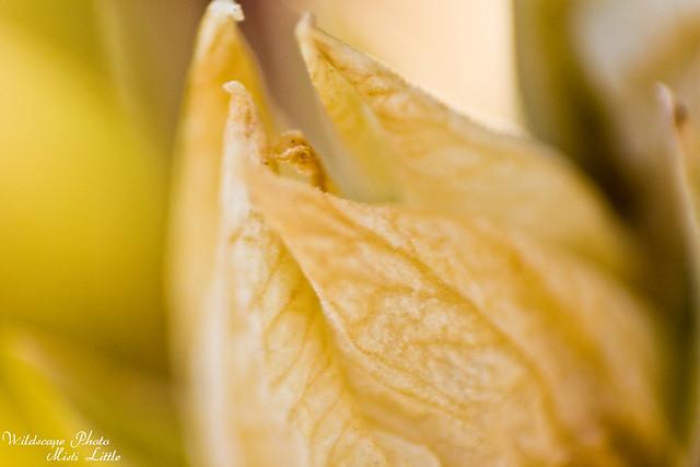 flowermacro