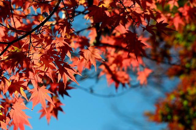 2011.12.04 台中 / 福壽山農場