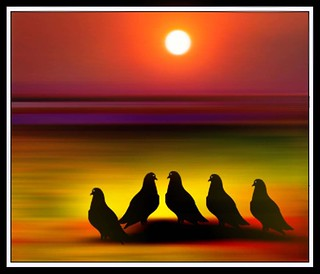 Five birds enjoying the Sunset
