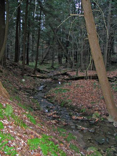 stream in Allegany State Park