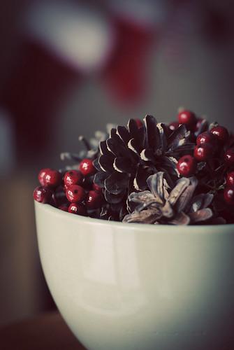 Cones & berries 2011