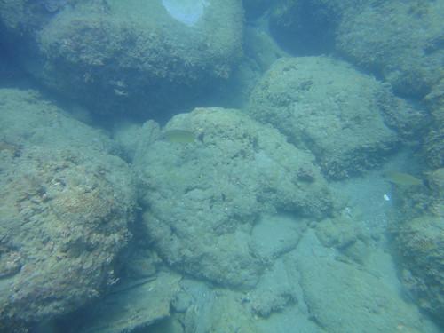 杉原珊瑚雖不少,卻面臨沉積物威脅(TEIA)