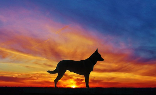 Silhouette and sunset by Scoutdogs (Chris)