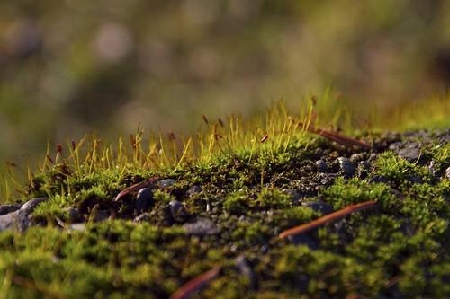mossy bits