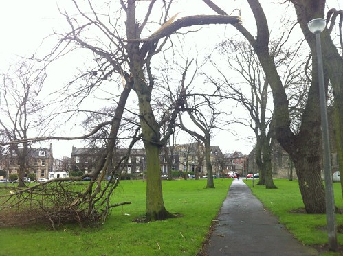 Large branch hangs over path on Leith Links