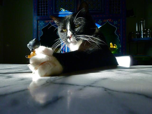kitty grab Henry grabs, Panasonic DMC-ZR3