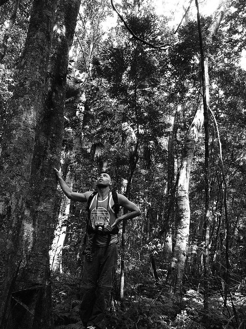 Contemplating Tall Trees - Forest Island Bushwalk - Royal National Park Sydney