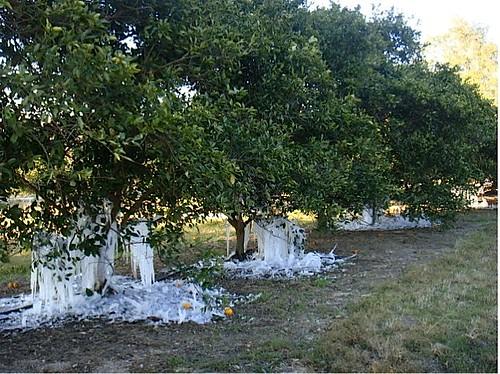 iced-grove