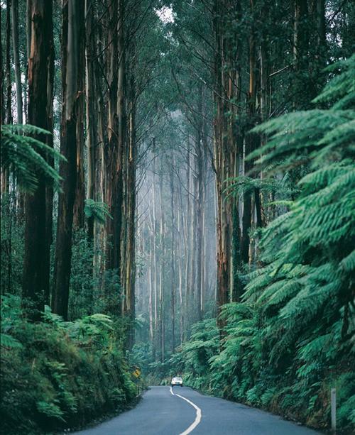 beautiful road_009