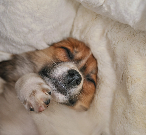 Puppy Time  - Sleeping by numbphoto - new for 2012