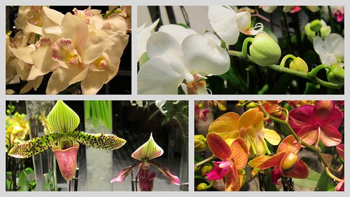 Orchids by Anna Amnell