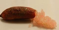 finger lime