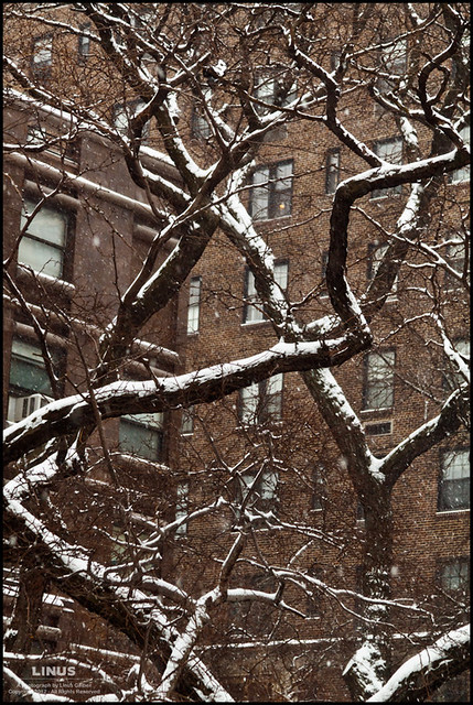 Along the Brooklyn Heights Promenade, the cold trees twist and dance in the first - and so far only - snowfall of 2012.  It's a welcome respite from our otherwise balmy winter.