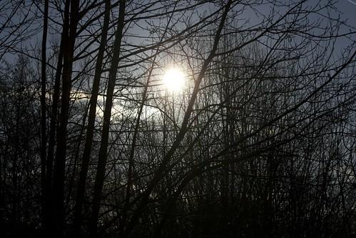 Bäume vor der Sonne