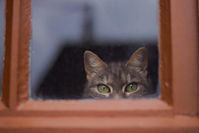 squeak à la fenêtre.jpg