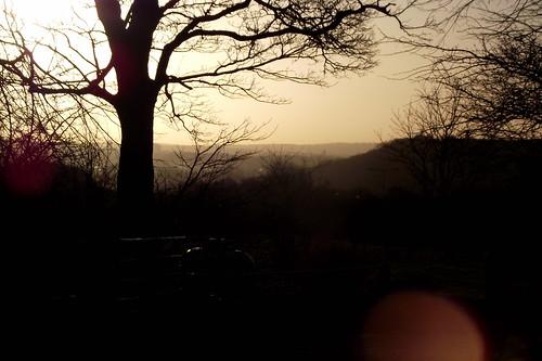 trees sunrise ravensdale