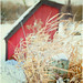 Happy Fence Friday {Little Red Shed} Edition! by pixelmama